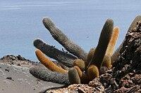 Habitat på Galapagosöarna.