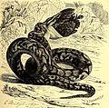 Brehms Tierleben - allgemeine Kunde des Tierreichs - mit 1800 Abbildungen im Text, 9 Karten und 180 Tafeln in Farbendruck und Holzschnitt (1892) (19792026294).jpg