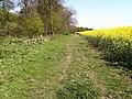 Bridleway beside the plantation - geograph.org.uk - 429778.jpg