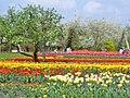 Britzer Garten - Tulipan 2013 - geo.hlipp.de - 36162.jpg