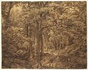 Brooklyn Museum - Forest Interior - William Trost Richards.jpg