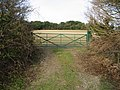 Brown Pudding Plantation beyond the gated field - geograph.org.uk - 649313.jpg