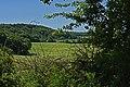 Buchenurwald Gramsin.jpg