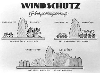 Windbreak - An East German windbreak promotion poster, 1952