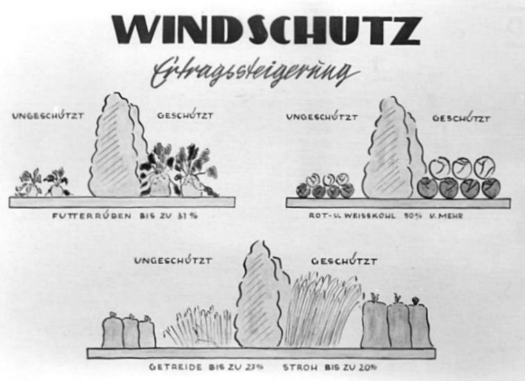 Bundesarchiv Bild 183-15117-0005, Infografik, Windschutz, Ertragssteigerung