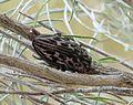 Buprestid Beetle. Sculptured Pine Borer. Chalcophora virginiensis - Flickr - gailhampshire.jpg
