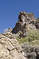 Butcher Jones Trail, Burro Cove and Beyond, Tonto National Park, Arizona - panoramio (60).jpg