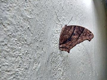 Butterfly hostel 04.jpg