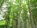 File:CHKO Křivoklátsko, nedaleko NPR Kohoutov.ogv