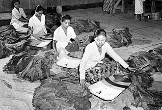 Kretek - Tobacco leaves sorting in Java. Tobacco was introduced by the Dutch during the colonial period.