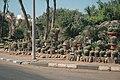 Cactus - panoramio - Павлуша.jpg