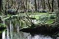 Calm refelctive stream quinault rainforest c bubar march 05 2015 (17313466971).jpg