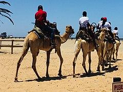 Camel Ride Swakopmund Namibia.jpg