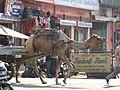 Camel cart (5337177482).jpg