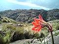 Caminho para o cume do Pico dos Marins.jpg