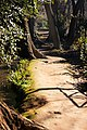 Caminitos del Generalife.jpg