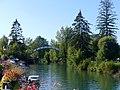 Canal de Savières à Chanaz en direction du Rhône (été 2018).JPG