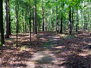 Lincoln County, Arkansas - Forested trail typical of western Lincoln County