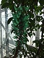 Canopy Walk - The Tropics - US Botanic Gardens 01.jpg