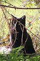 Cat 9173 (9369987592) (3).jpg