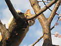 Cat on the tree 6.jpg