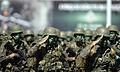 Cerimônia comemorativa do Dia do Soldado e de Imposição das Medalhas do Pacificador (QGEx - SMU) (20692099758).jpg