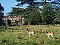 Charlecote park - panoramio (18).jpg