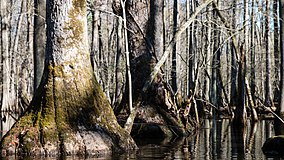 Charles C. Steirly Natural Area (33577649240).jpg