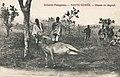 Chasse au dagoué (Guinée).jpg
