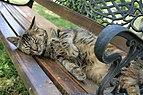 Chat domestique dormant sur un banc.jpg