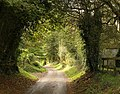 Clatcombe Lane - geograph.org.uk - 1556480.jpg