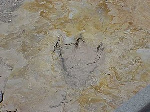 Trackway - A fossilized dinosaur footprint from a fossil trackway at Clayton Lake State Park, New Mexico.