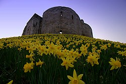 Yellow flowers on a grassy slope with a stone tower in the background.