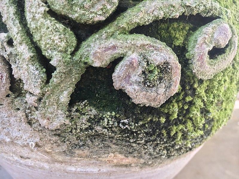 File:Close up of a flowerpot.jpg