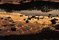 Cloud reflections in Ernesettle Creek.jpg