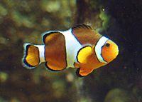 Gerd Bluefish.png