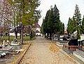 Cmentarz Przeciszów.jpg