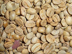 English: Coffea arabica, Rubiaceae, Arabica Co...