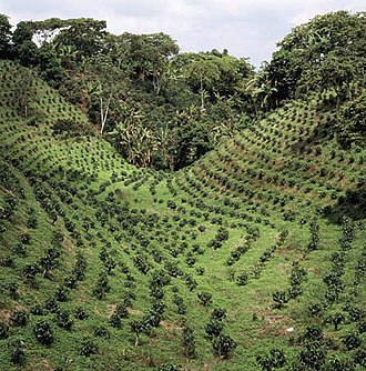 Coffee production in India - Coffee plantation in India