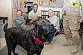 Combat stress dog visits 73rd EACS 111201-F-XH170-005.jpg