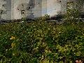 Concrete silos, Concrete, WA. (36417695454).jpg