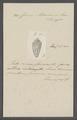 Conus adansonii - - Print - Iconographia Zoologica - Special Collections University of Amsterdam - UBAINV0274 085 10 0053.tif