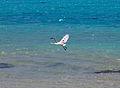 Cook Islands IMG 5349 2 (8451963721).jpg