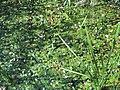 Cooper Marsh Conservation Area 21.jpg