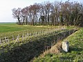 Copse and milestone - geograph.org.uk - 1269750.jpg