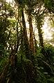 Costa Rica rainforest.jpg