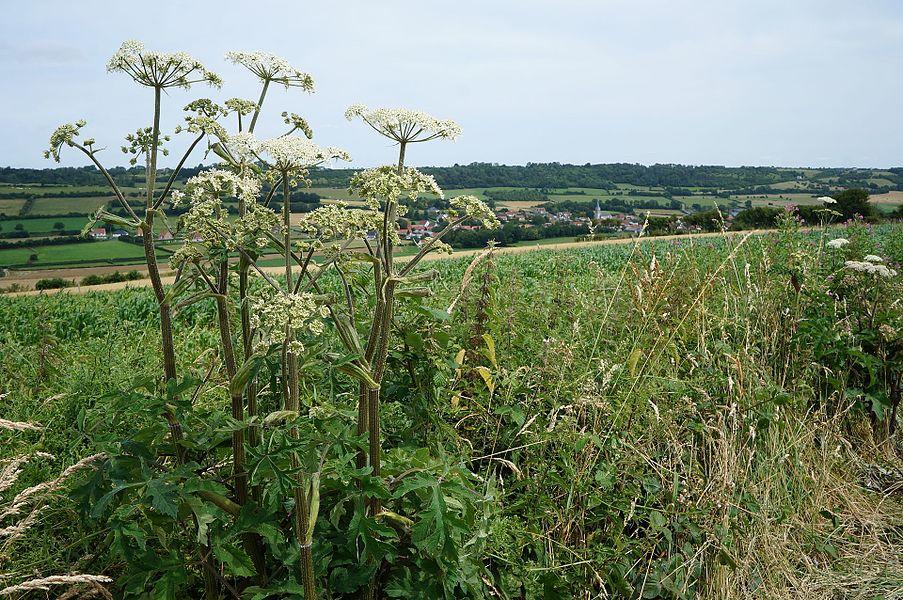 Dans la campagne autour de Coulomby Pas-de-Calais Hauts-de-France