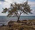 Crimea (37381366746).jpg