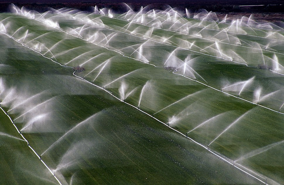 Crop sprinklers Rio Vista California 15 Jul 2004-002