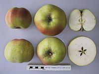 Cross section of Arthur Turner (LA 71A), National Fruit Collection (acc. 1975-301).jpg